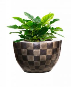 bowl-capiz-pattern-philodendron-imperial-green