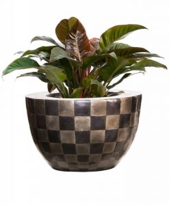 bowl-capiz-pattern-philodendron-imperiall-red