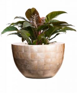 bowl-capiz-shell-philodendron-imperiall-red