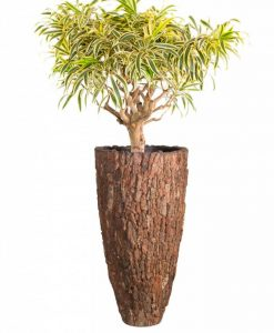 vase-pine-bark-dracaena-song-of-india